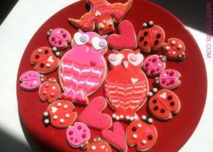 lovebird owls