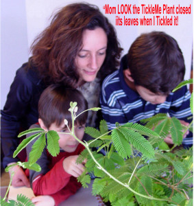 Mom_and_Boys_with_TickleMe_Plant_with_caption_2 (1)