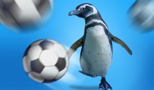 510x300 Soccer Penguin FLAT