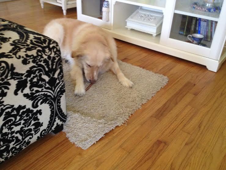 best for my pets odor free bully sticks. Black Bedroom Furniture Sets. Home Design Ideas