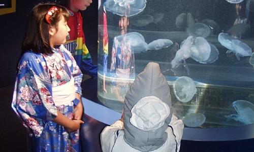 Scarium of the Pacific at the Aquarium <small class=