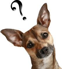 dogquestionmark