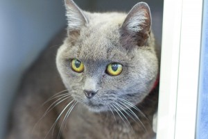 Haley, May 28 Pet of the Week