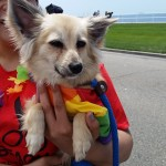Levi, May 21 Pet of the Week