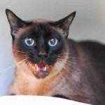 Manolo, June 25 Pet of the Week