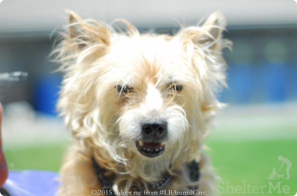 Tramp, July 2 Pet of the Week