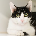 Whiskers, July 23 Pet of the Week