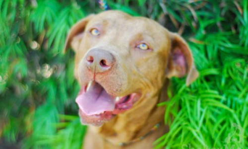 Silly Willy is Pet of the Week!