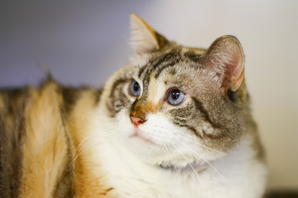 Cloris, Sept. 10 Pet of the Week