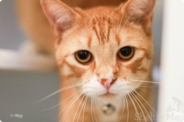 Tom Tom, Sept. 24 Pet of the Week