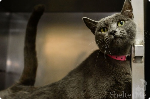 Gracie, Oct. 22 Pet of the Week