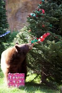 OC Zoo Bear Christmas