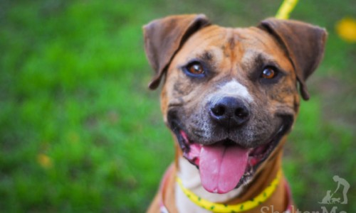 Leia is the Pet of the Week