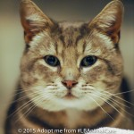 Leonardo, February 4 Pet of the Week