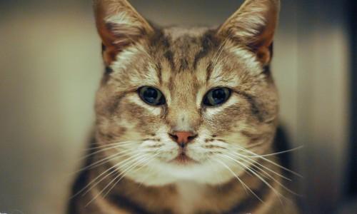Leonardo is Pet of the Week!