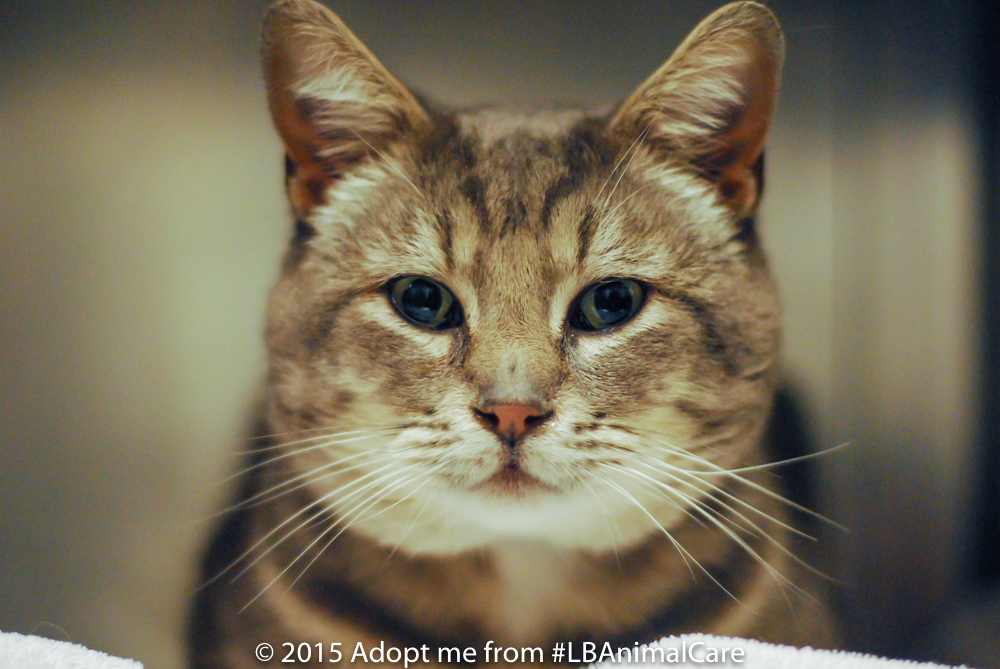 Leonardo, February 4 Pet of the Week