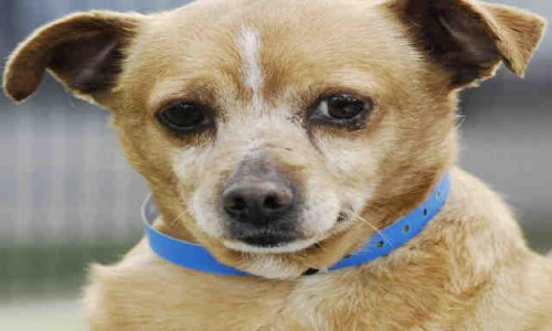 Chunky Monkey is Pet of the Week!
