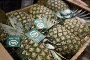 WFM- Pineapples