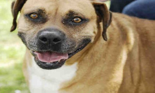 Lucy is Pet of the Week!