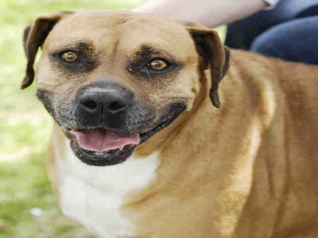 lUcy, June 30 Pet of the Week