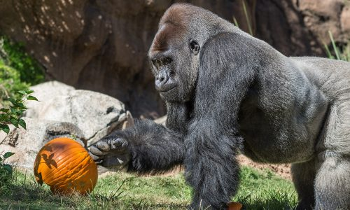 BOO @ LA ZOO Offers Spooky Caves, Up-Close Visits with Crawly Animals and more Halloween Fun!