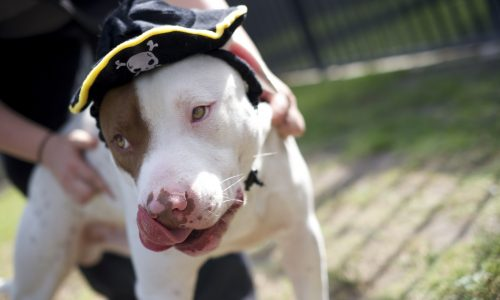 Popeye is Pet of the Week!