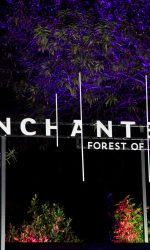 enchanted-forest-of-light-sign