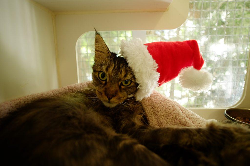 mrs-norris-december-15-pet-of-the-week