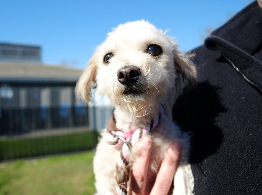 Daisy, January 19 Pet of the WEek
