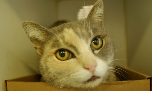 Agatha is Pet of the Week!