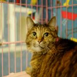 Kitty, May 20 Pet of the Week