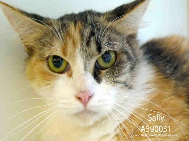 Sally, June 22 Pet of the Week