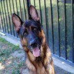 Hank, August 17 Pet of the WEek