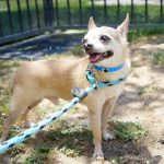 Shaq, August 10 Pet of the Week