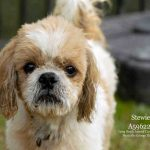 Stewie, September 21 Pet of the Week