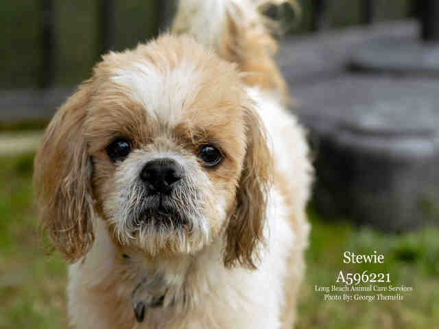 Stewie, September 21 Pet of the Week