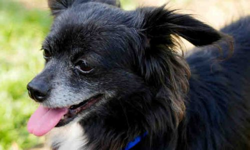 Blacky, April 19th, 2018 Pet of the Week!