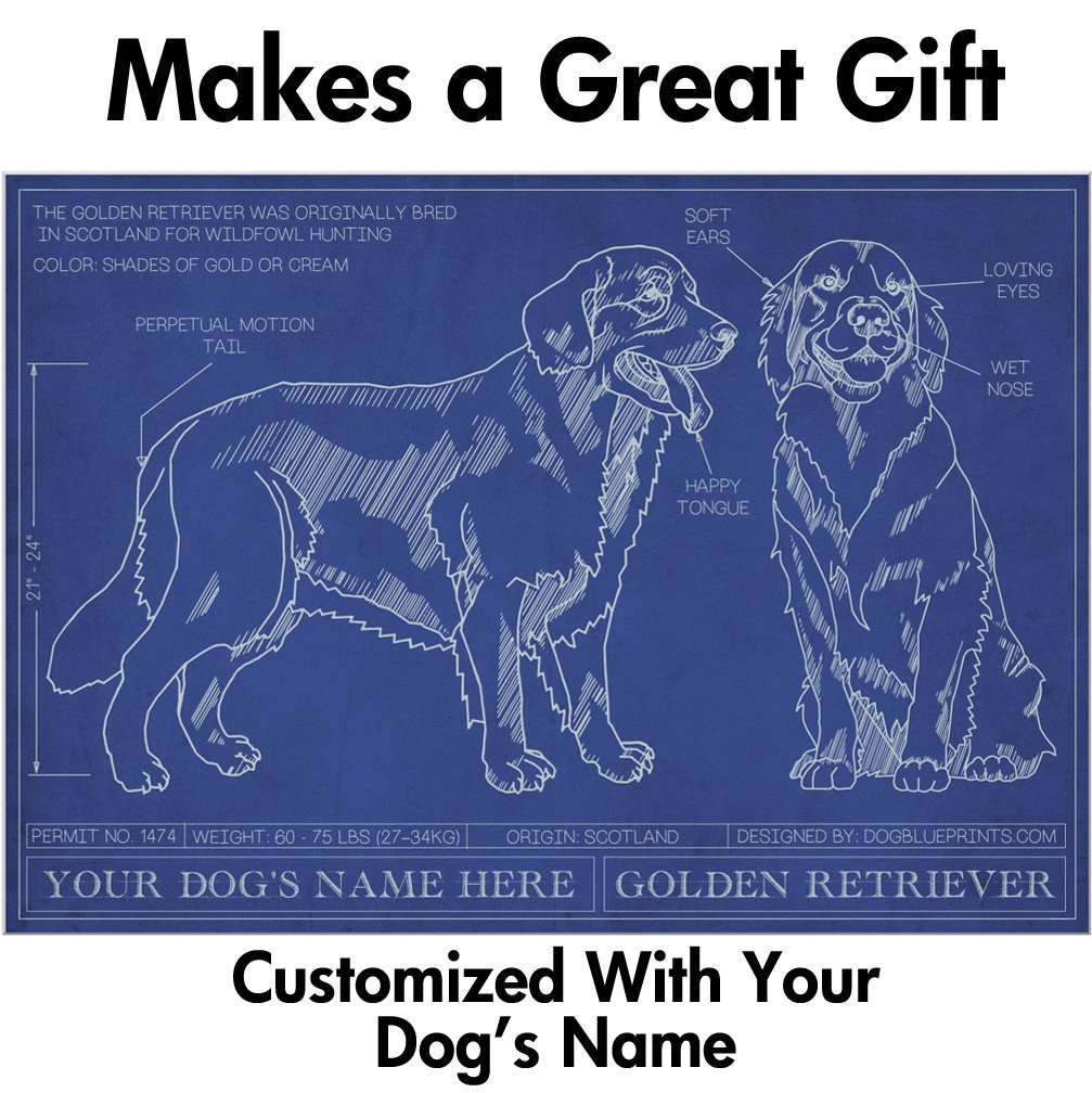 Golden Retriever Blueprint With Personalized Dog Name Makes A
