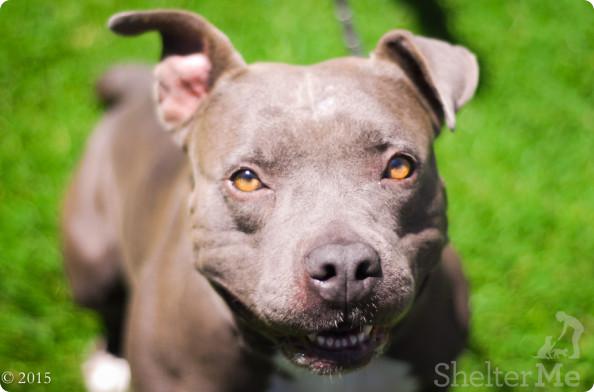Roxy, June 18 Pet of the Week