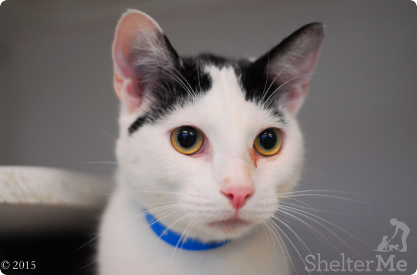 Hades, July 9 Pet of the Week