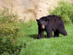 OC Zoo Elinor Bear