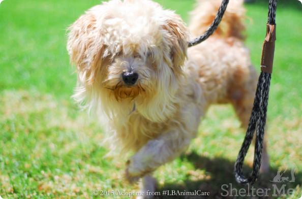 Benny, Sept. 17 Pet of the Week