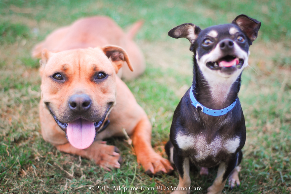 Odd Couple, Oct. 1 Pet of the Week