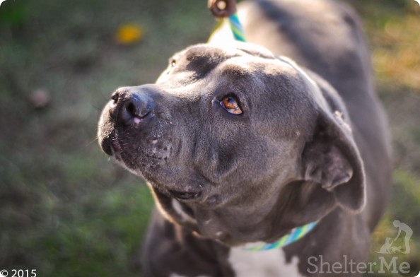 Tina, January 14 Pet of the Week