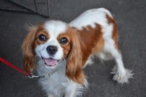 Dog at OC PET Expo
