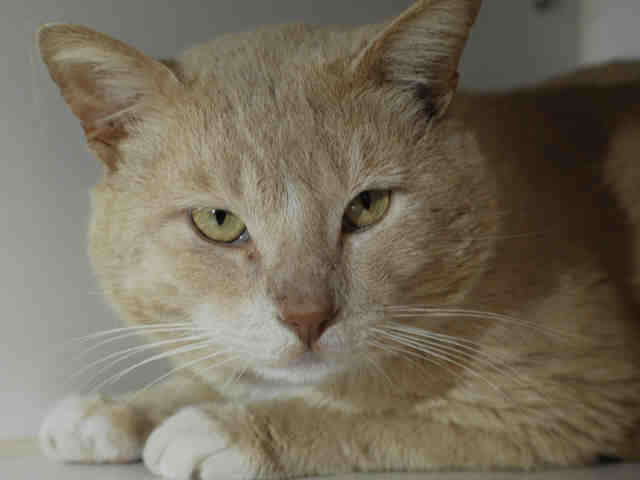 macdaddy, May 12 Pet of the WEek