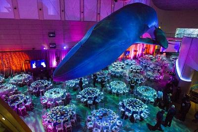 Aquarium Gala 2013_083.jpgssssssss
