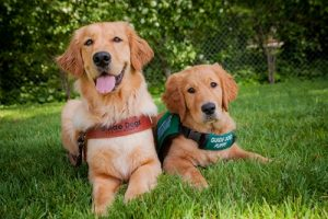 guide-dog-adult-and-puppy