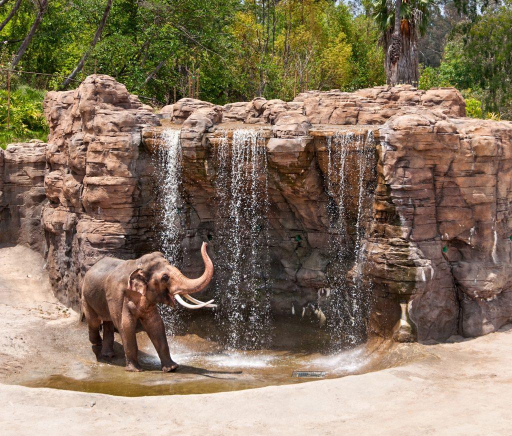 GL-Elephants-B