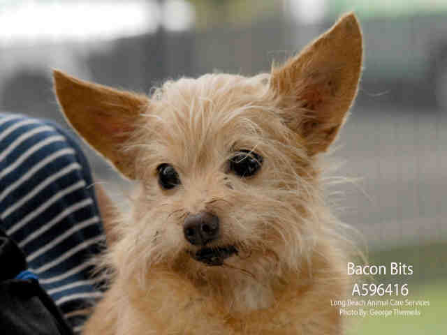 BAcon Bits, September 28 Pet of the WEek